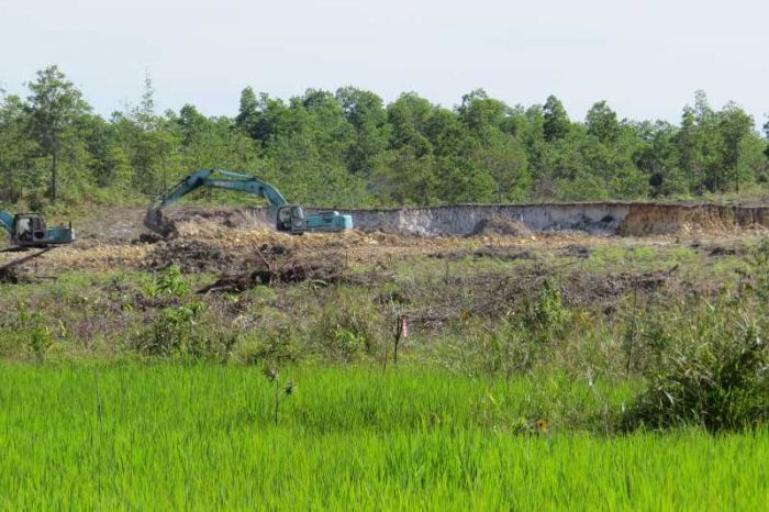Destruction of paro habitat near Sibu Sarawak airport kent
