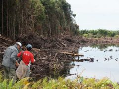 Destruction of habitat Lundu Sarawak peter beyer